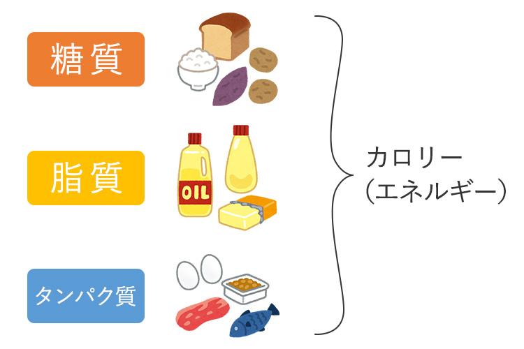 三大栄養素